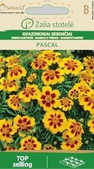 Peiulill PASCAL hind ja info | Lilleseemned | kaup24.ee