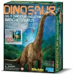 Arheoloogiline komplekt 4M Dinosaurus Brahhiosaurus hind ja info | Arendavad mänguasjad 3+ | kaup24.ee