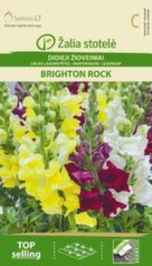 Львиный зев Brighton Rock цена и информация | Львиный зев Brighton Rock | kaup24.ee