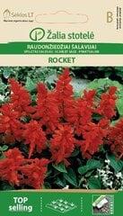 Punane salvei Rocket