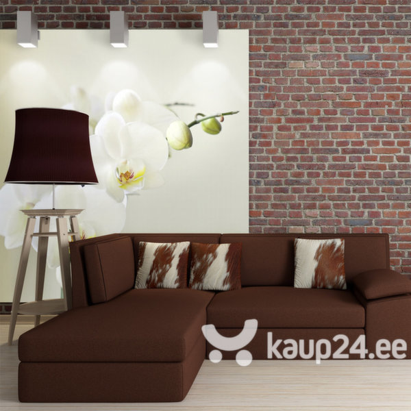 Fototapeet - White orchid