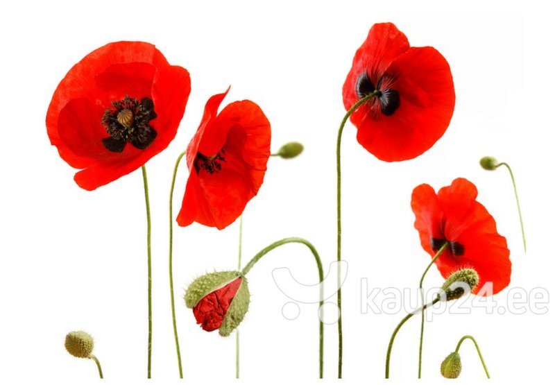 Fototapeet - Red poppies, summertime reminiscence