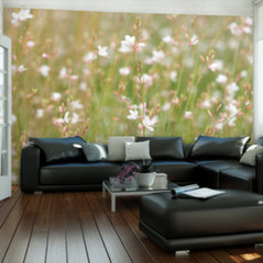 Fototapeet - White delicate flowers