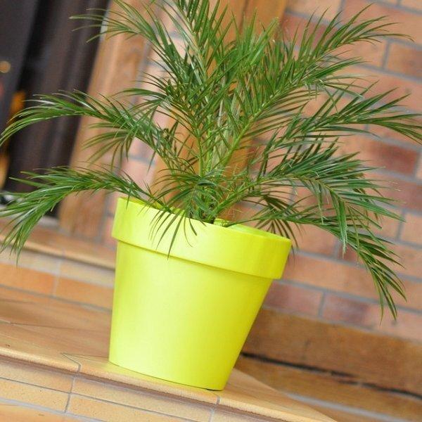 Материал: пластик Размеры: 17 x 15 см цена и информация | Dekoratiivsed lillepotid | kaup24.ee