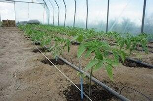 Kasvuhooonete kastmissüsteem (veevarustus) L90 koos mehaanilise taimeriga hind ja info | Kastekannud, voolikud, niisutus | kaup24.ee