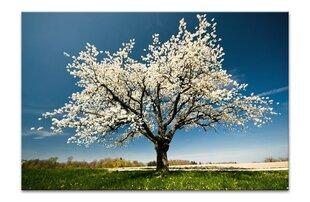 Maal, õitsev puu, XL hind ja info | Maal, õitsev puu, XL | kaup24.ee
