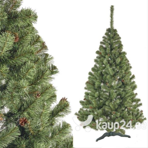 Jõulupuu käbidega Liza, 1 m