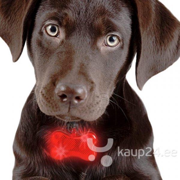Särav LED ripats kaelarihmale, punane цена и информация | Jalutusrihmad, kaelarihmad ja traksid koertele | kaup24.ee