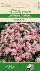 Mehhiko päsmaslill PINK BALL hind ja info | Mehhiko päsmaslill PINK BALL | kaup24.ee