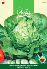 Salat Hilde II, White Boston, ASEJA, 3g, 26150( 2 )