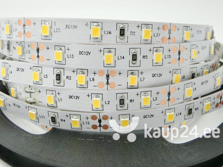 6 W/m LED riba Luxsonn, 2835, 60 LED/m, (6000K) külm valge
