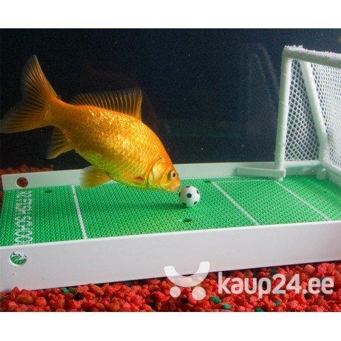 Kala koolitamise komplekt цена и информация | Muud originaalsed kingiideed | kaup24.ee