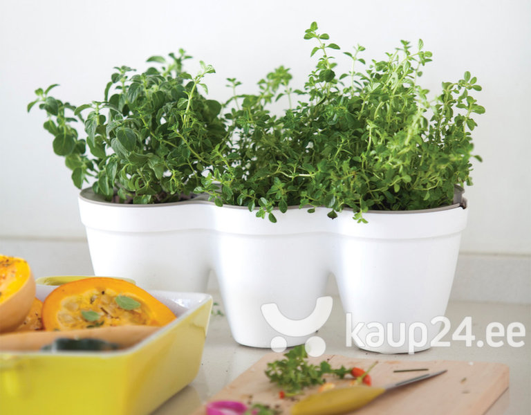Lillepott Keter IVY Herbs, valge цена и информация | Dekoratiivsed lillepotid | kaup24.ee