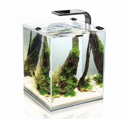 Akvaarium SHRIMP SET SMART 10 Black, must