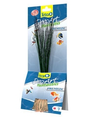 Kunsttaimed Tetra Hairgrass​, 24 cm