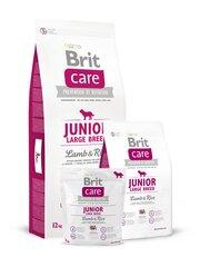 Kuivtoit koertele Brit Care Junior Large Breed Lamb & Rice 12 kg hind ja info | Kuivtoit koertele Brit Care Junior Large Breed Lamb & Rice 12 kg | kaup24.ee