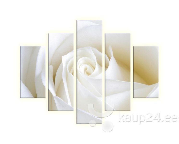 Viieosaline maal, roos I цена и информация | Seinapildid | kaup24.ee